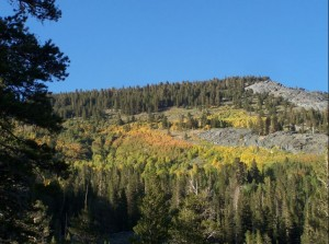 Typical of the aspen groves above 9,000 feet, this grove above Gem Lake shows a mix of green, yellow, and orange. Photo by Greg Reis.