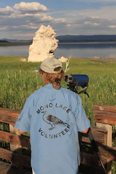 "A person wearing a blue shirt with ""Mono Lake Volunteer"" written on the back with a drawing of a California Gull, standing in front of a spotting scope at a boardwalk bird watching station overlooking a tufa tower and Mono Lake."