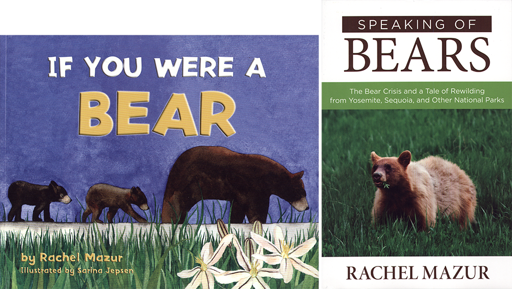 holiday-shopping-bear-books