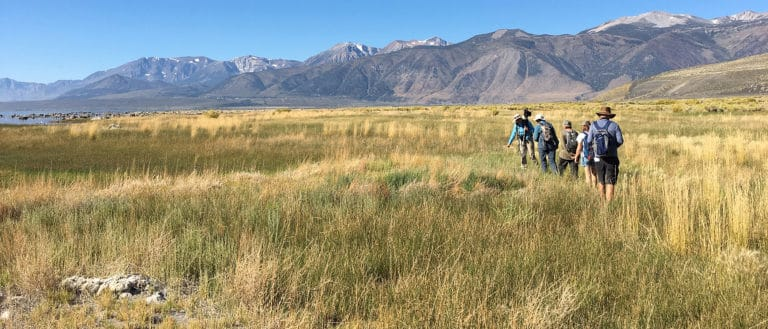 A group of 6 people walk in a line in a wide expanse of tall green and yellow grasses with the Eastern Sierra mountains in front of them and a blue cloudless sky above.