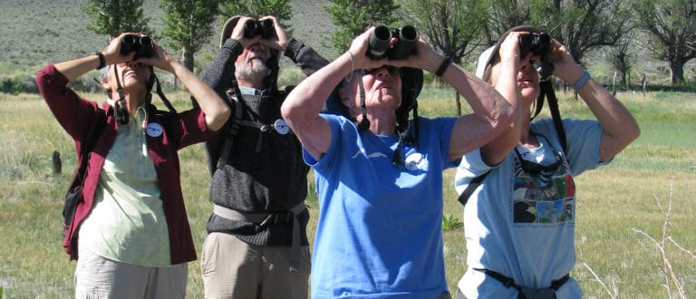 Four birders stand in a line with binoculars, all looking up at the same point. Grass and trees are behind them.