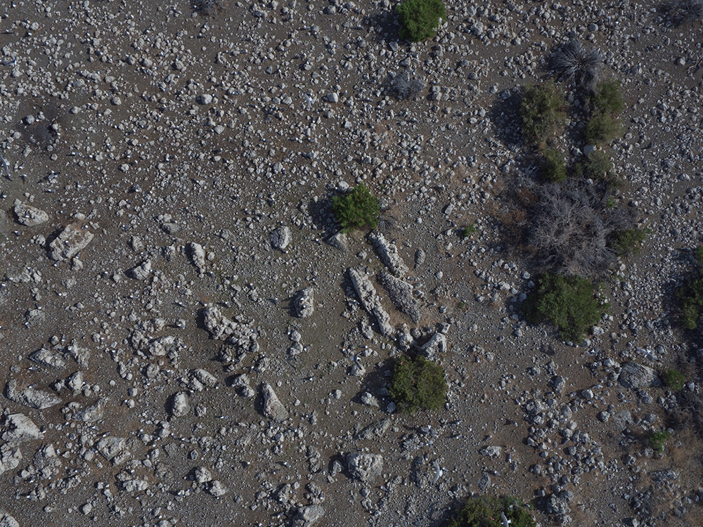 A dark gray rocky  ground is spotted with lighter gray rocks and small green bushes.