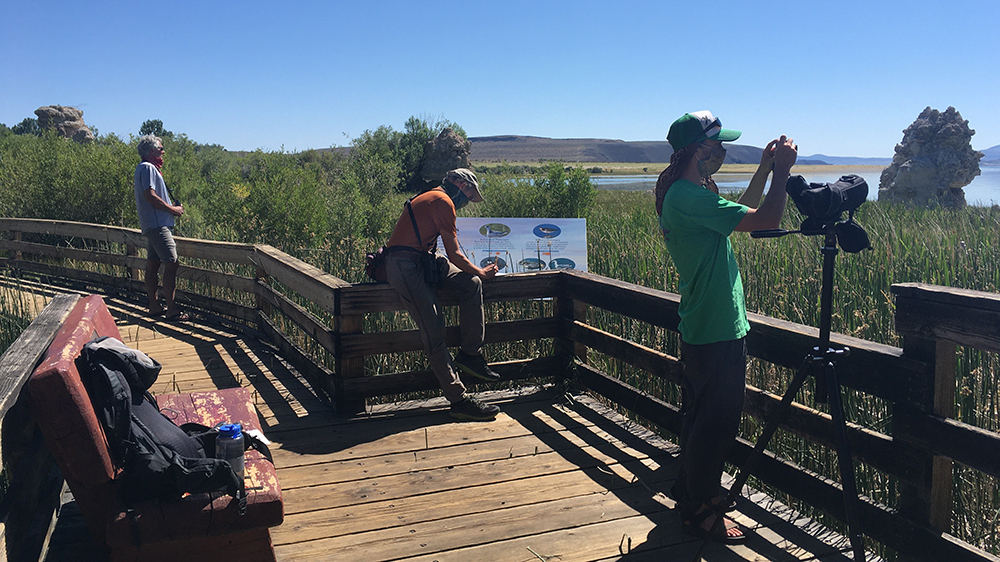 Three people stand on a board walk looking through binoculars towards the grasses and tufa and writing in a notebook.