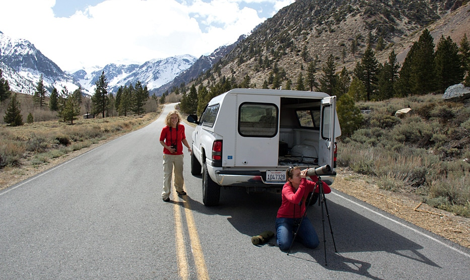 Two researchers, one with binoculars, and one kneeling in front of a spotting scope, beside a white truck parked on a mountain road.