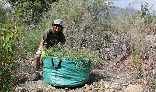 Person standing with their hands on a very large bag of vegetation pulled out from the streambed she is standing in, with willows and other vegetation around her.