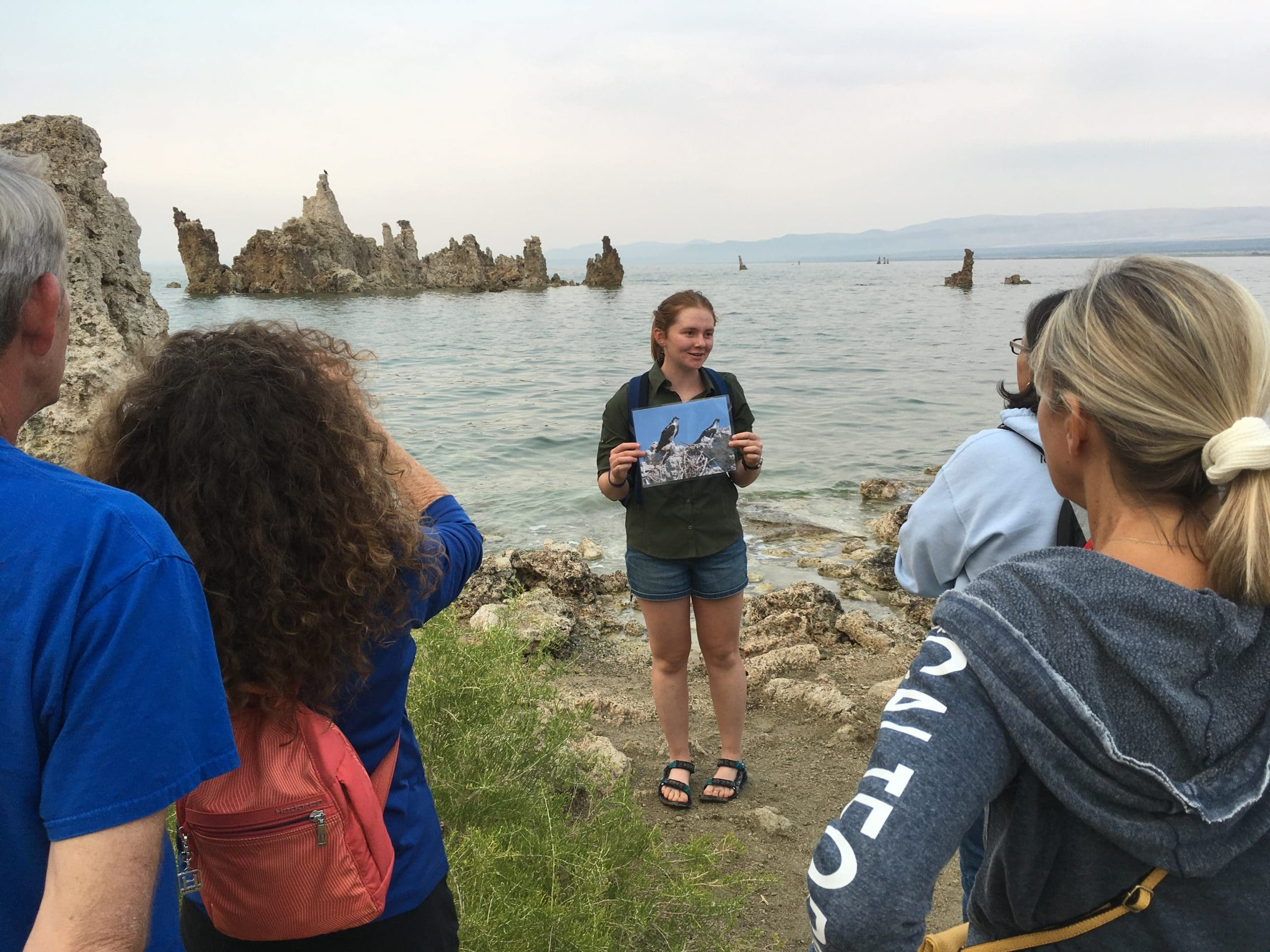 Four people gather around a guide holding a photograph of two large fish eating hawks, Osprey, as she stands on the shore of Mono Lake with the lake in the background and a large island of tufa towers sticking up out of the water in the distance.