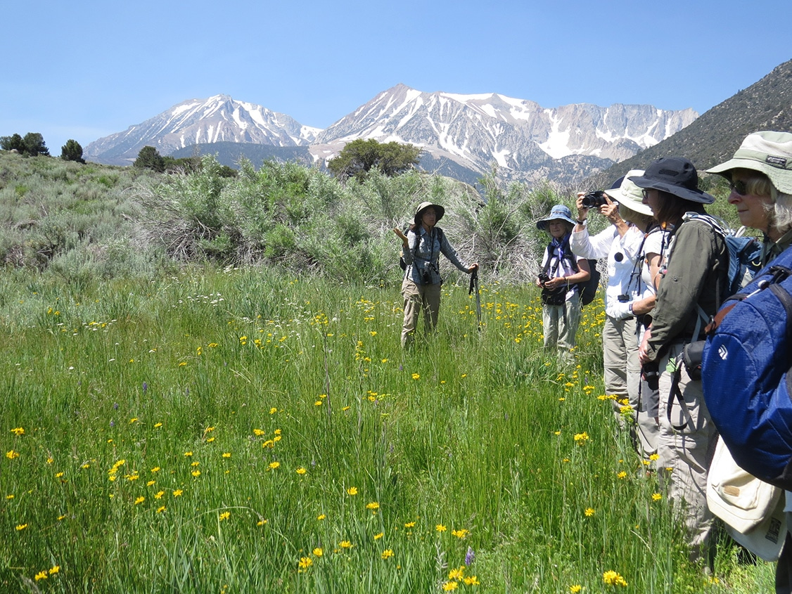 Five people look out over a field of green with yellow, white, and purple flowers as a guide standing in the field with a hiking stick talks, with the Sierra Nevada with snow in the distance.