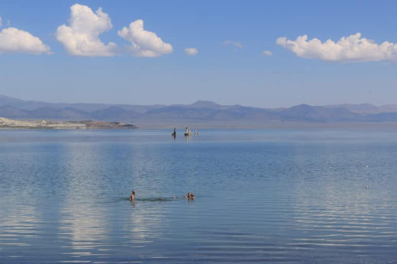 A big blue expanse of Mono Lake and equally blue sky with a few puffy white clouds as four people swim and float in Mono Lake with four tufa towers in the distance and a couple of California Gulls on the surface of the lake too.