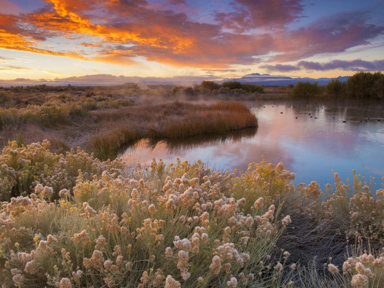 Sunrise at a pond surrounded by fall vegetation with ducks on the pond and steam rising from it, with bright orange and gold clouds inthe blue clearing sky.
