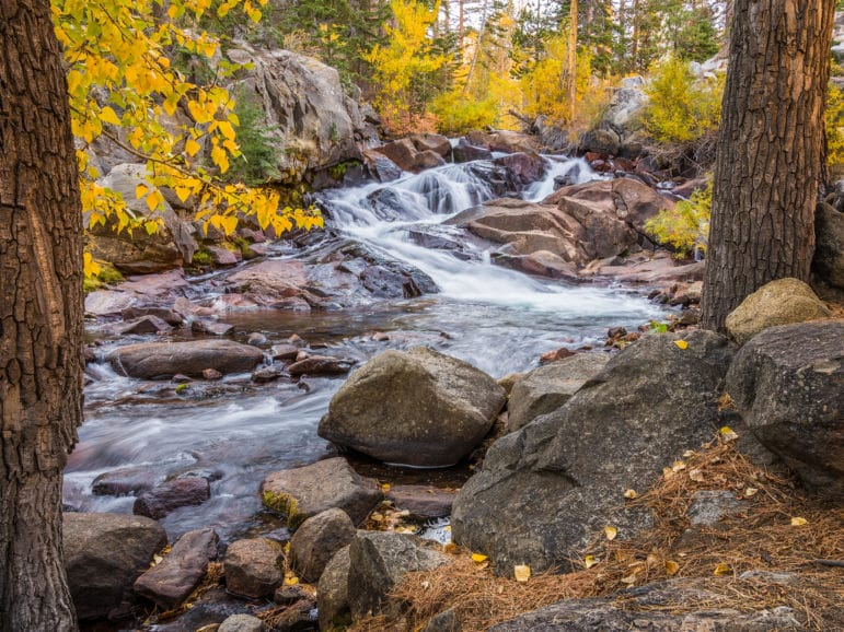 Fall along a rushing creek with water cascading softly over rocks and deciduous trees in bright yellow and framed by two evergreen tree trunks.