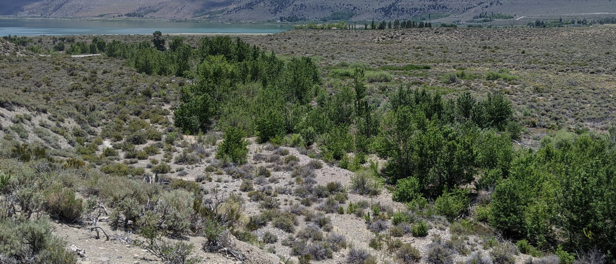 View of Mill Creek from a bluff overlooking a line of cottonwood and willow trees as it meanders through the desert toward Mono Lake.