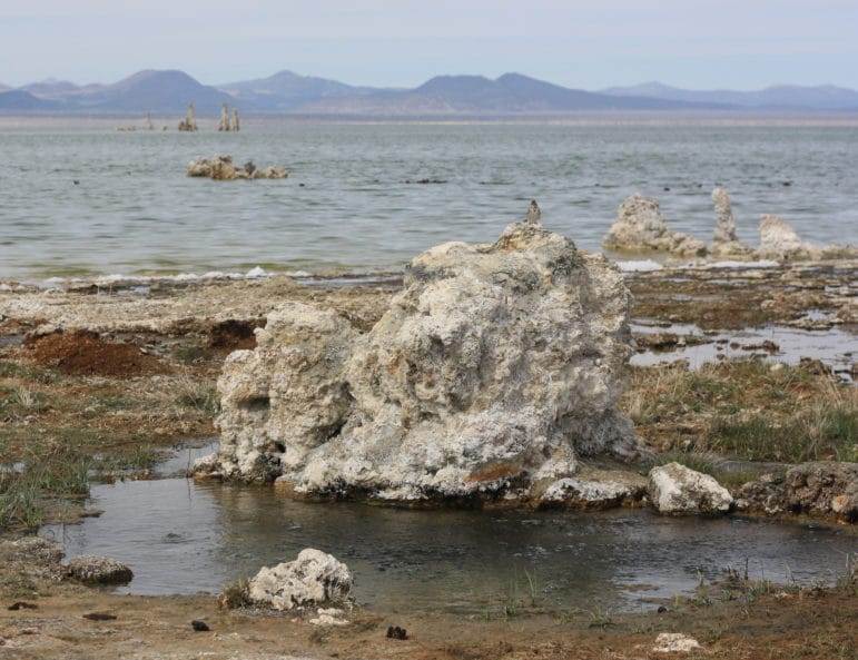 Tufa rock next to a a freshwater spring surrounded by mud and grasses with the shoreline of Mono Lake in the distance.