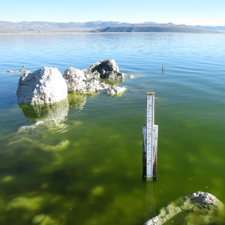 A lake level gauge, which looks like a measuring stick mounted to a board with some salt crust, emerges from a green lake near some tufa mounds, with another lake level gauge in the distance and a glassy Mono Lake and blue skies in the distance.