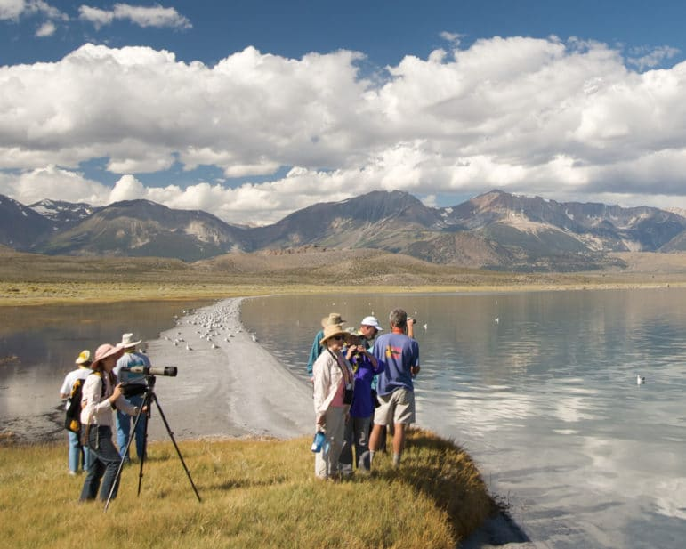 Nine people standing at the shoreline of Mono Lake with binoculars and a spotting scope out over a glassy blue lake with California Gulls on a sandbar and the Sierra Nevada mountains looming tall in the distance with a beautiful blue sky with puffy white clouds.