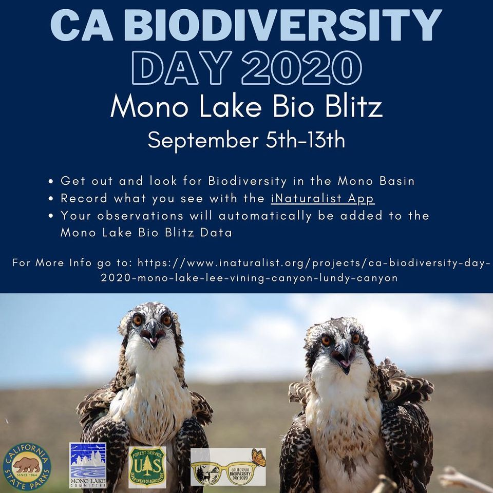 A dark blue poster for CA Biodiversity day 2020. The bottom half of the poster is a photo of two ospreys with white breasts, brown wings, and yellowy brown eyes.