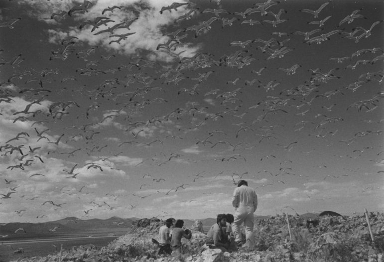 Black and white image of researchers studying California Gulls at Mono Lake working below a sky filled with flying gulls.