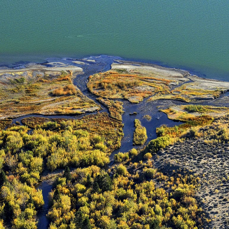 Colorful aerial view of part of the Lee Vining Creek delta with winding blue waterways green and yellow vegetation, and a bright blue-green Mono Lake.