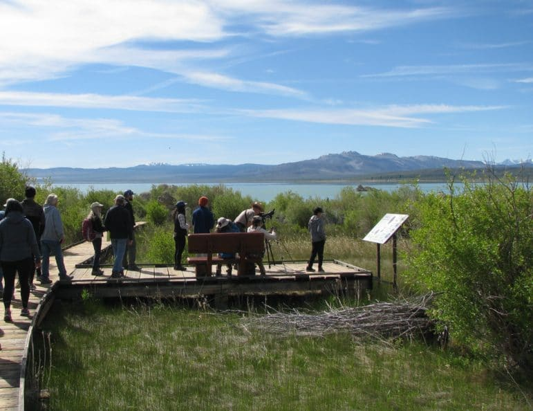 Fourteen people walking on a boardwalk above a marsh with a bench an interpretive signs, and one of them is in a ranger outfit and they are setting up a spotting scope, and it is a beautiful sunny day with lush vegetation around and a view of Mono Lake and the Mono Craters in the distance from Mono Lake County Park.