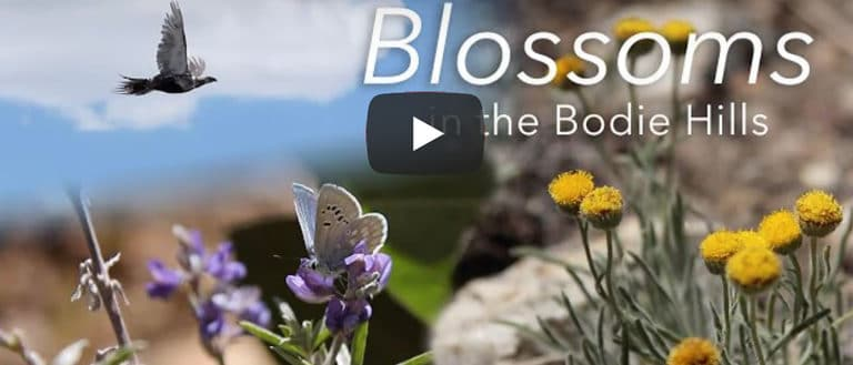 A frame from the youtube video shows yellow and purple flowers and a bird flying with mountains in the distance.