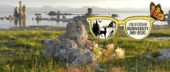 Tufa and shoreline of Mono Lake with a logo for California Biodiversity Day 2020 of a pair of sunglasses with a deer, lake, mountains, and hawk in one lens, and a butterfly purched on top.