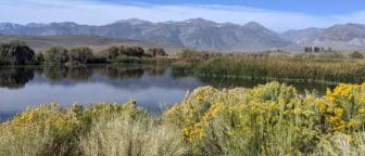 A glassy pond surrounded by brush with yellow flowers, reeds, and larger trees, with the Sierra Nevada in the background.