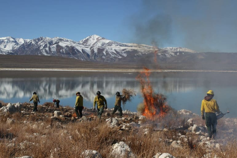 Wildland firefighters burning invasive weeds on island in Mono Lake.