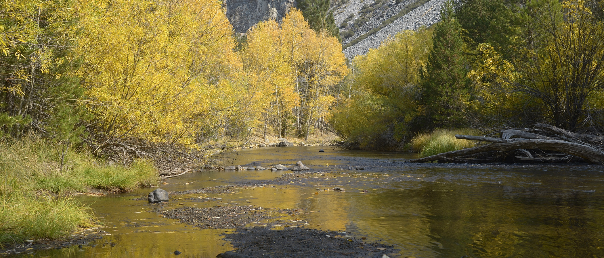 Trees with bright yellow leaves line a shallow creek, which flows towards gray gravel hills.
