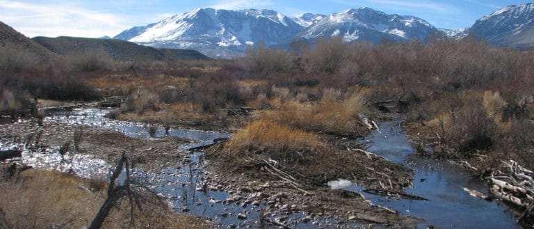 Three small, shallow paths of dark blue water glisten in the sun as they snake through pebbles and brown branches, and snowy mountains rise behind them.