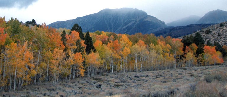 A line of deciduous trees in bright fall colors dotted with pine trees in front of a tall mountain with clouds coming over.