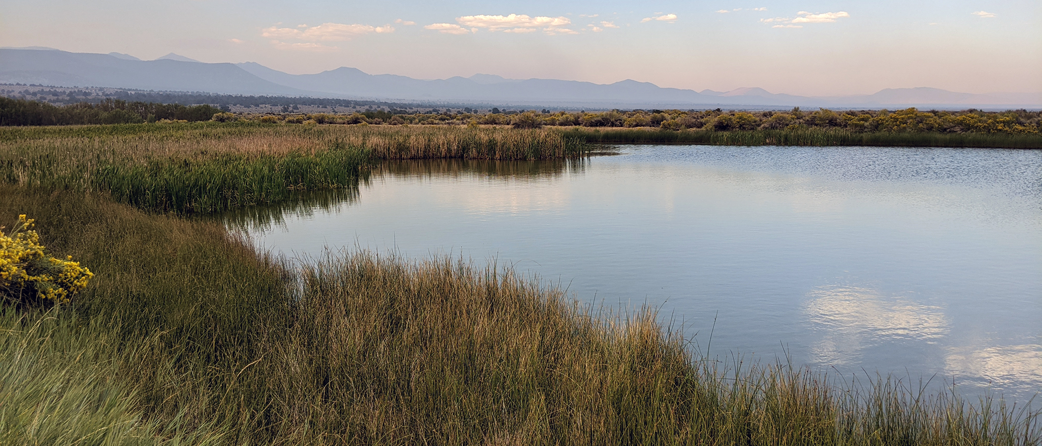 Green grasses line the still pond water, which reflects the light blue and pastel pink sky.