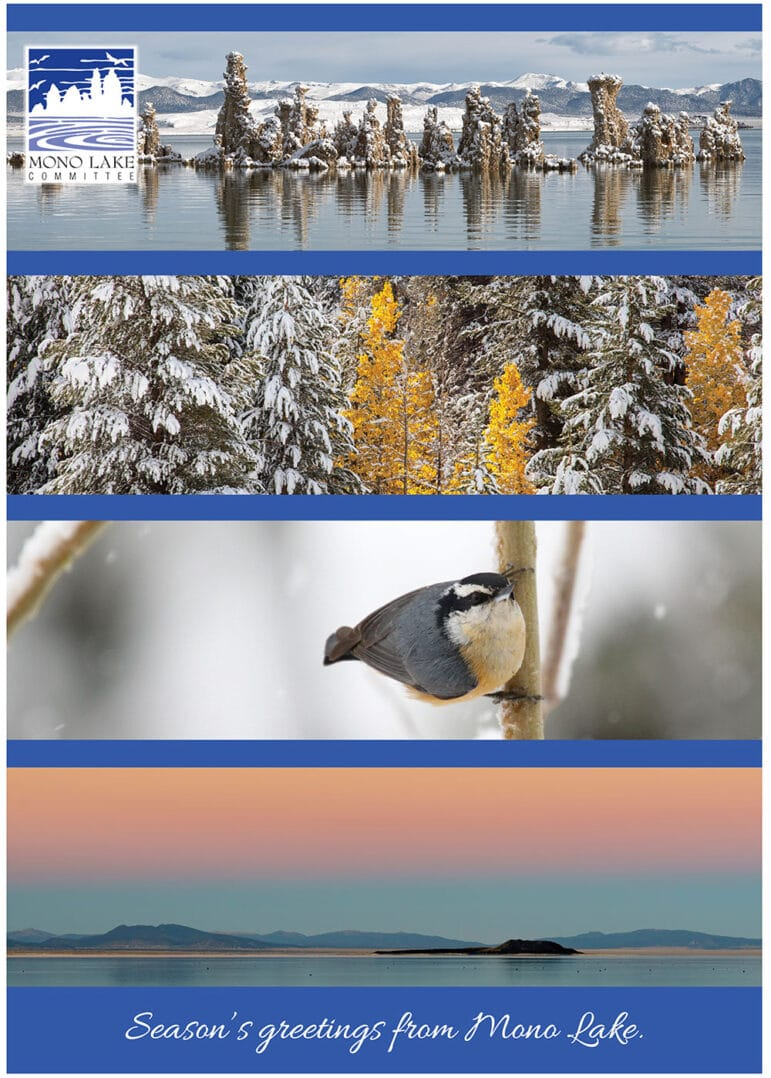 Five different horizontal photos make up a season's greetings card: snowy tufa, snow covered evergreen trees, A small bird on a branch, and a light pink and orange sunset over Mono Lake.