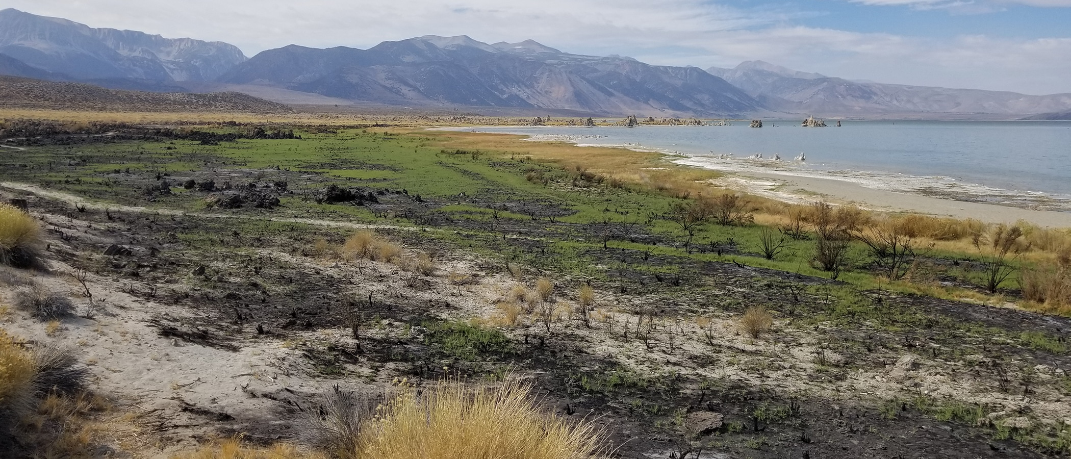 Turquoise waves wash up on the sandy colored shores of Mono Lake, and the landscape shifts from yellow grasses to bright green plants striped with darker rocky swaths. The Sierra Nevadas loom dark blue in the background.