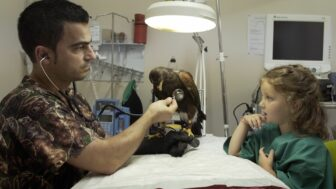 A veterinarian sitting across from a medical table from a young girl. The vet holds a stethoscope to a large brown bird with yellow claws.