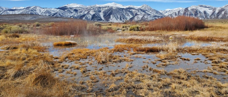 The DeChambeau Pond water is filled with golden brown and green grasses and plants, with the snow covered Sierra Nevada mountains behind it.