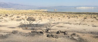 Sage brush on Navy Beach is patchy and slightly darkened, with hazy skies above Mono Lake in the distance.