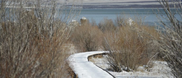 The snow covered boardwalk snakes through bare brambles towards Mono Lake.