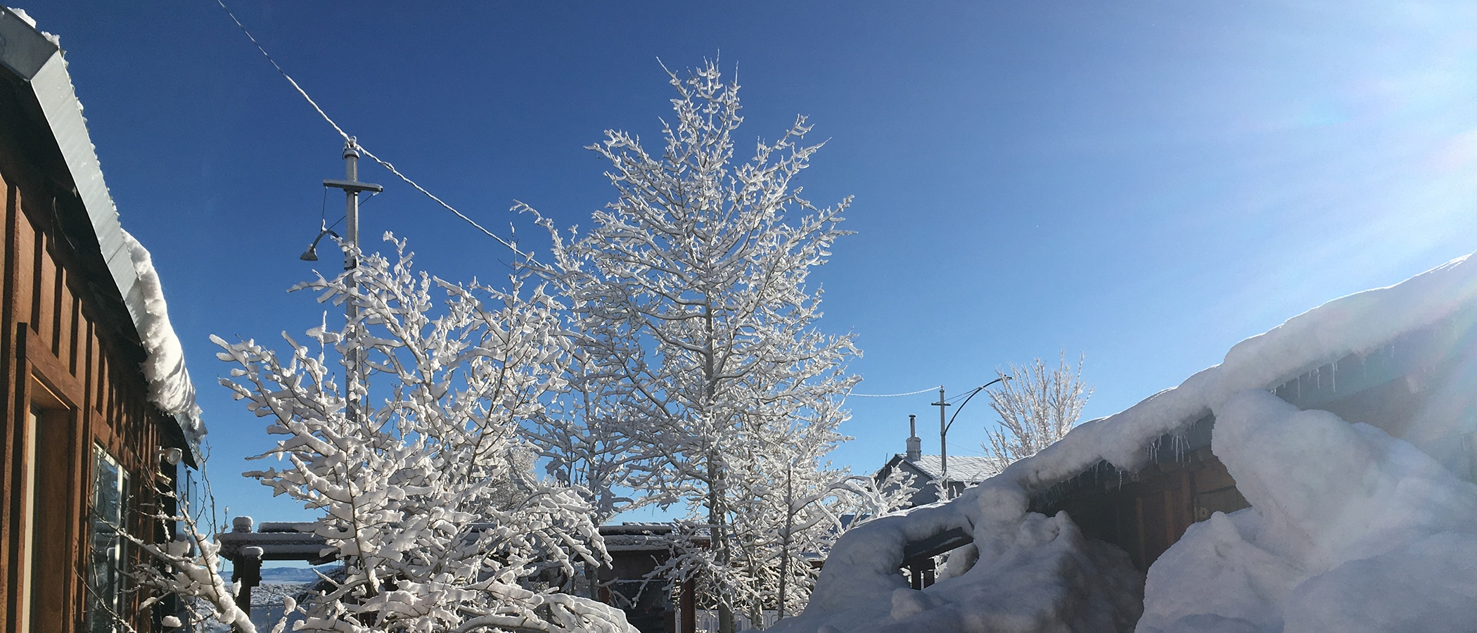 Snow covered trees against a clear blue sky.