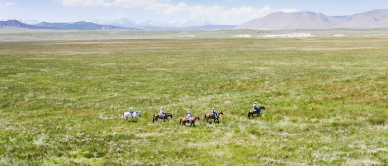 5 horses with riders walk through a light green field which stretches far into the distant mountains.