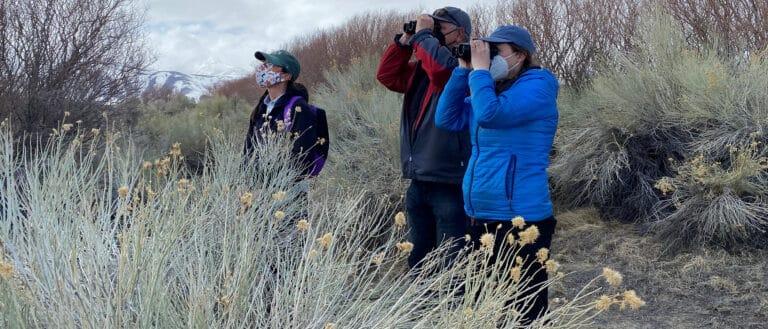 Three birders stand amidst sagebrush and bitter brush looking through binoculars.