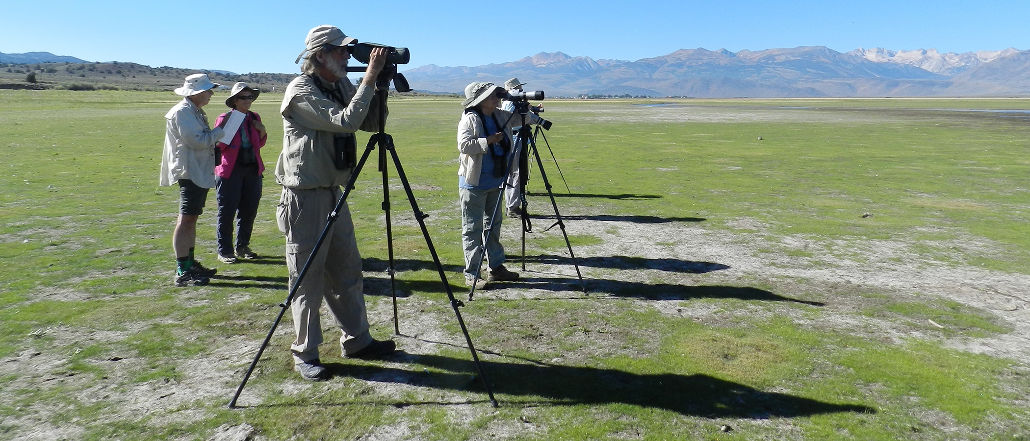Birders stand at tall scopes on a flat green plain.