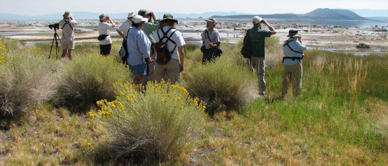 A group of several birders stand in the shrubbery along mono shore. Some look through binoculars towards the water.